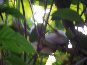 The little white (blurry) chicken in a tree